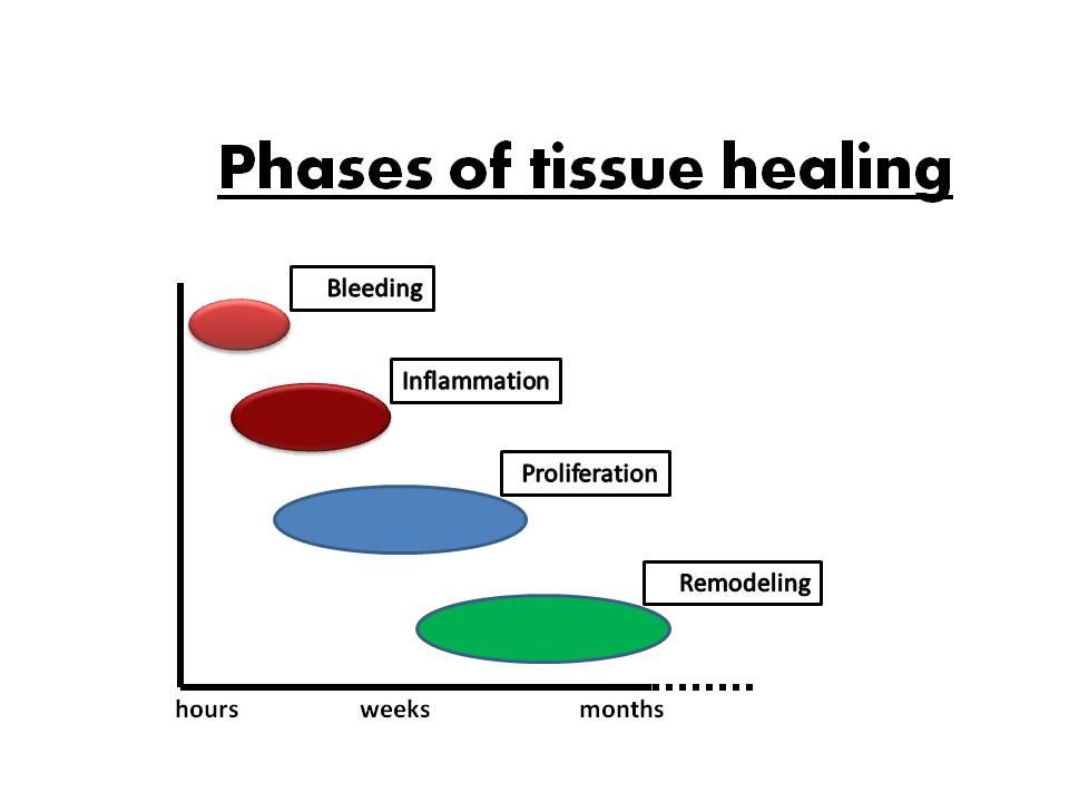 tissue-healing-eng